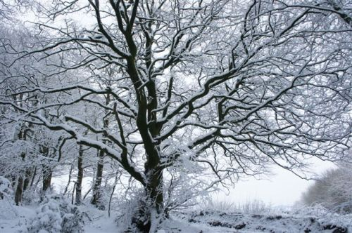 More snow........
